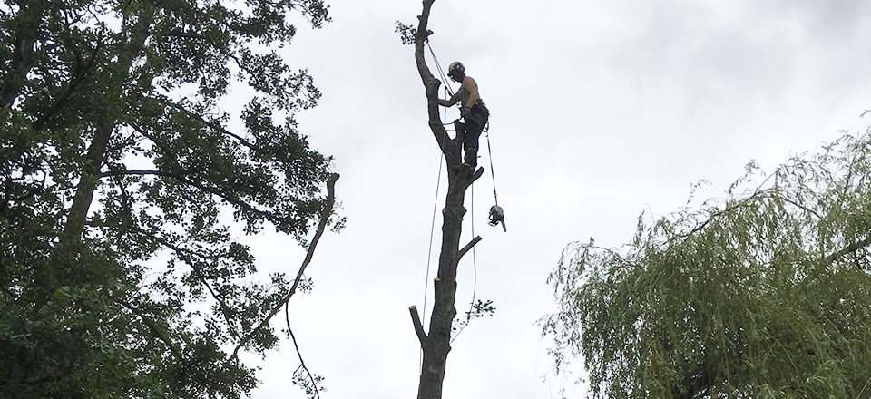 Tree surgery in Amesbury